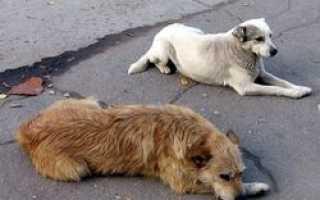 В Кирове ветеринары просят горожан оказать помощь в реабилитации бездомных собак