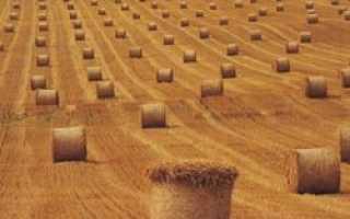 Украина будет перенимать опыт Эстонии в деле развития сельского хозяйства