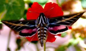 Ученые обнаружили влияющий на окраску бабочек ген