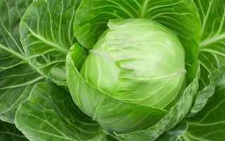 Учёные рассказали о пользе капусты для кровеносной системы