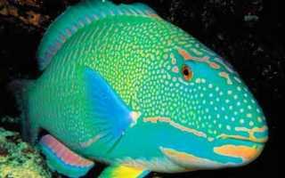 Самки рыб изучают отцовские инстинкты потенциальных партнеров