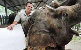 В парках Индонезии и Бали делают бумагу из слоновьего навоза