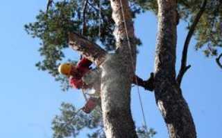 Спил опасных деревьев должны производить профессионалы