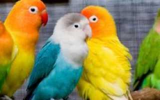 В центре внимания пограничников ФСБ оказались 125 волнистых попугаев