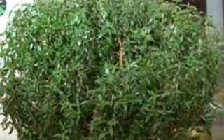 Растения-доктора