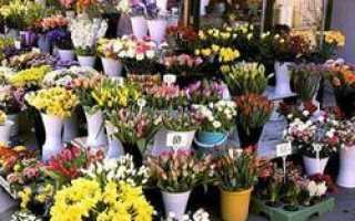 Продавцы цветов даже ночью не теряют бдительности