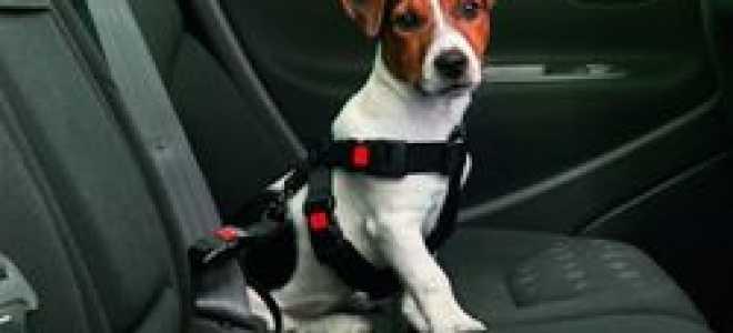 Перевозим животных в автомобиле правильно