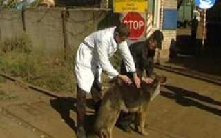 Беженцы из Украины могут не только сами получить приют на территории России, но и прихватить с собой своих домашних животных
