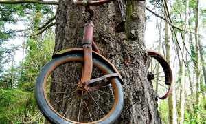 Велосипед вросший в дерево: история и разоблачение (8 фото и видео)