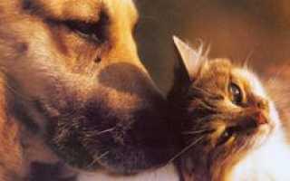 В России предлагают ввести налог на домашних животных