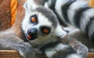 В Перми проходит уникальная выставка «Джунгли-парк»