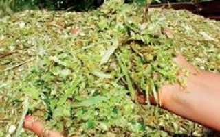Строительный утеплитель из степной травы будут изготавливать в Оренбурге