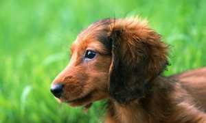 Как экономнее содержать домашних животных