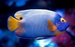 Глобальное потепление уничтожит 60% видов рыб