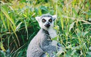 Зоопарк в Оломоуце:  амурские тигры, бегемоты  и другие
