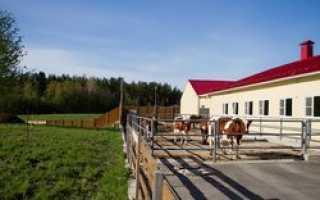 Российские крестьянские хозяйства осваивают высокие технологии