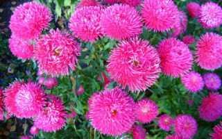Букеты цветов в российских магазинах преимущественно импортные. Но свое производство цветов уверенно растет