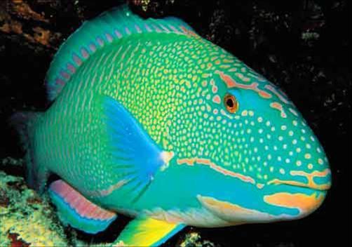 Самки рыб