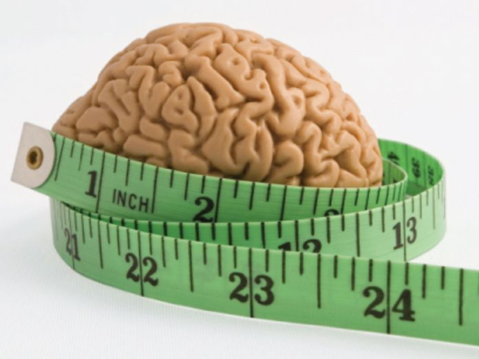 Лишние килограммы уменьшают мозг
