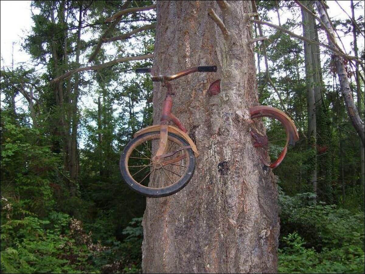 Велосипед вросший в дерево