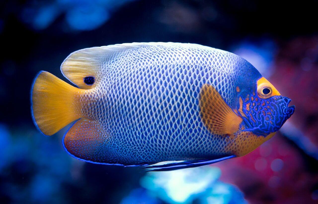 Исчезнет 60% видов рыб